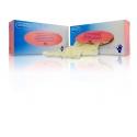 Alvita guantes de Vinilo con polvo talla M 100 uds
